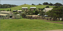 Ace Hi Riding Ranch - Northern Rivers Accommodation