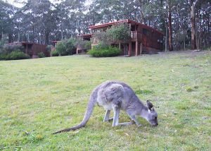 Jenolan Caves Cottages - Northern Rivers Accommodation
