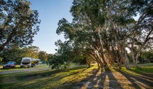 Delicate campground - Northern Rivers Accommodation