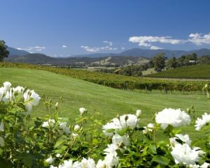 Balgownie Estate Vineyard Resort and Spa - Northern Rivers Accommodation