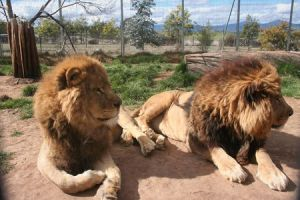 Mansfield Zoo - Northern Rivers Accommodation
