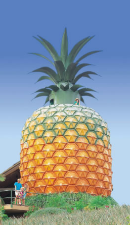 The Big Pineapple - Northern Rivers Accommodation