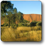 Uluru - Kata Tjuta National Park - Northern Rivers Accommodation