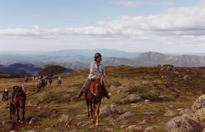 High Country Horses - Northern Rivers Accommodation