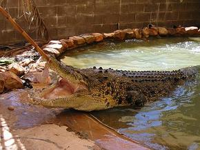 Wyndham Zoological Gardens and Crocodile Park - Northern Rivers Accommodation