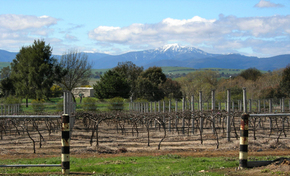Buller View Wines - Northern Rivers Accommodation