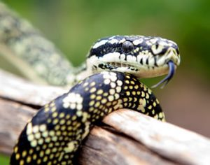 Reptile Encounters - Northern Rivers Accommodation