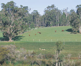 Scenic Drives - Bunbury Collie Donnybrook - Northern Rivers Accommodation