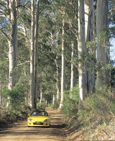 Mount Shadforth Scenic Drive - Northern Rivers Accommodation
