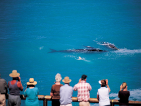 Whale Watching At Head Of Bight - Northern Rivers Accommodation