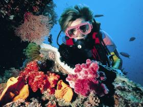 Cook Island Dive Site - Northern Rivers Accommodation