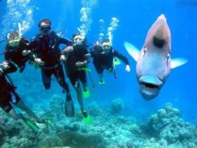 Jew Shoal Dive Site - Northern Rivers Accommodation