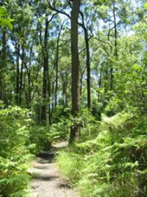 Mapleton Falls National Park - Northern Rivers Accommodation