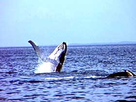 Whale Watching - Northern Rivers Accommodation