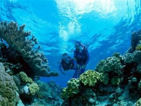 Coral Gardens Dive Site - Northern Rivers Accommodation