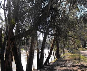 Mia Forest Drives Narrandera - Northern Rivers Accommodation