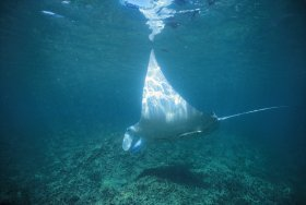 Manta Ray Bay Dive Site - Northern Rivers Accommodation