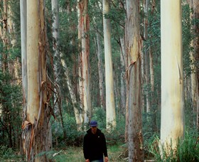 Blue Gum Forest - Northern Rivers Accommodation