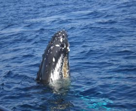 Jervis Bay Whales - Northern Rivers Accommodation
