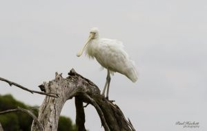 Melbourne Birding Tours - Northern Rivers Accommodation