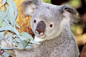 Perth Zoo General Entry Ticket and Sightseeing Cruise - Northern Rivers Accommodation