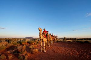 Uluru Camel Express Sunrise or Sunset Tours - Northern Rivers Accommodation
