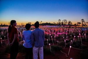 Uluru Field of Light Sunrise Tour - Northern Rivers Accommodation