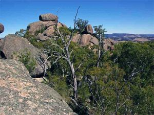 Evans Crown Nature Reserve - Northern Rivers Accommodation