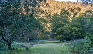 Griffins walking track - Northern Rivers Accommodation