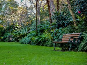 EG Waterhouse National Camellia Gardens - Northern Rivers Accommodation
