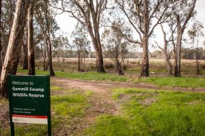 Gemmill Swamp Wildlife Reserve - Northern Rivers Accommodation
