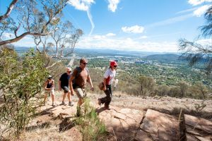 Mount Ainslie Lookout - Northern Rivers Accommodation