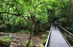 Rainforest Loop Walk Budderoo National Park - Northern Rivers Accommodation