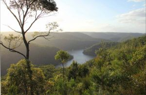 Great North walk - Berowra Valley National Park - Northern Rivers Accommodation