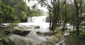Nellies Glen Carrington Falls - Northern Rivers Accommodation