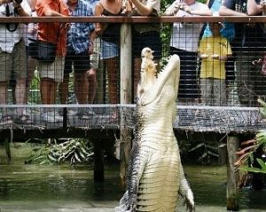 Hartley's Crocodile Adventures - Northern Rivers Accommodation